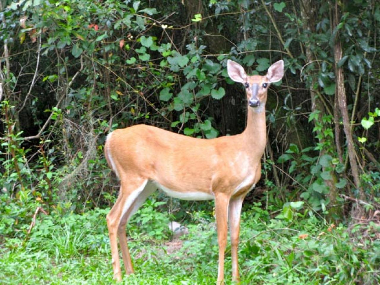 How To Protect Your Garden From Deer Hgtv