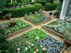 Intensive Gardening Allows a Lot of Produce to Grow in a Small Space