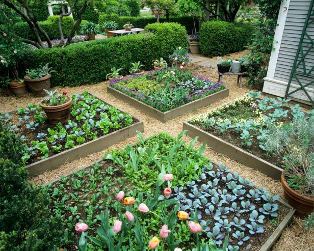 How to Design a Raised Garden HGTV