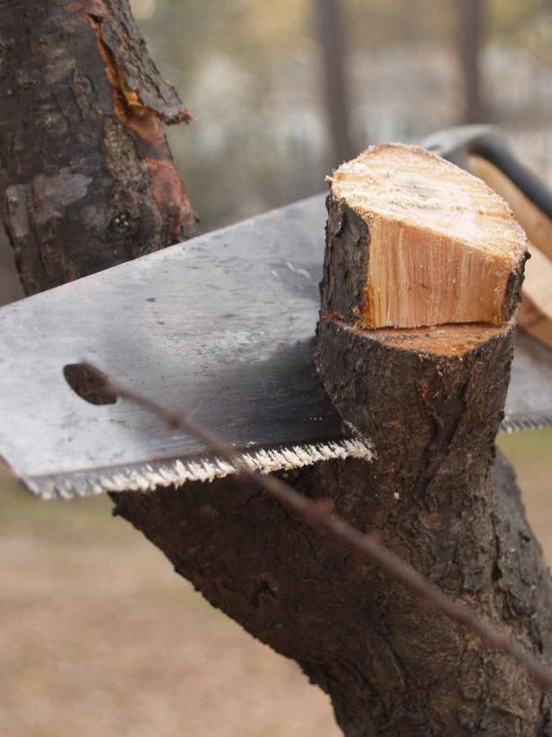 Pruning Tree Limb
