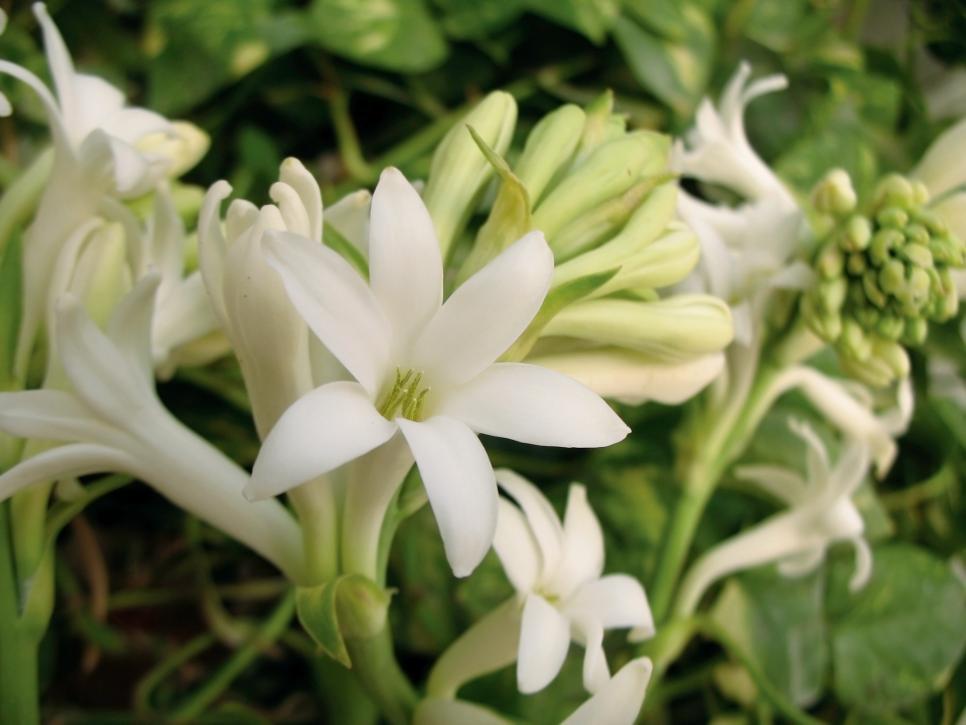 choosing fragrant flowers and plants
