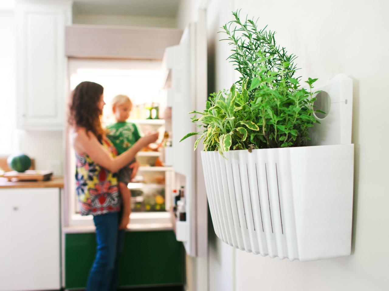 Living Walls Bring Container Gardening Indoors | HGTV