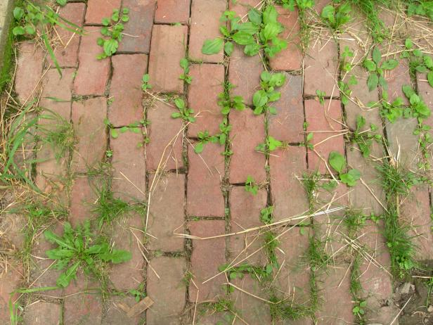 A solution of vinegar, salt, and dish soap can be a cheap and effective tool against some weeds.