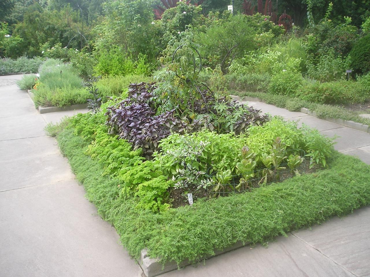 Edible landscape design hgtv for Edible garden ideas designs