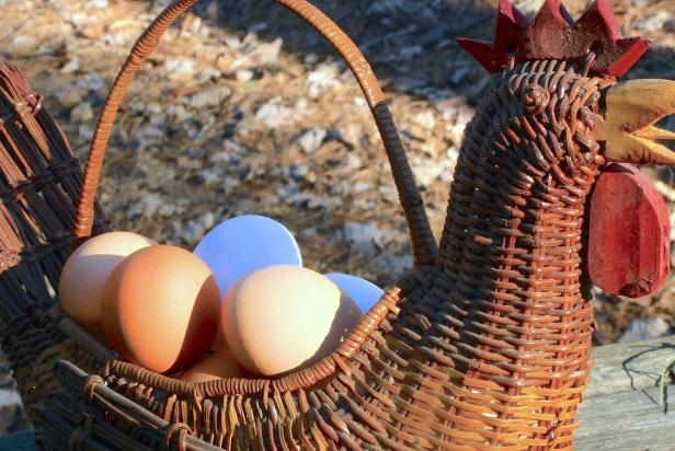 Winter egg production