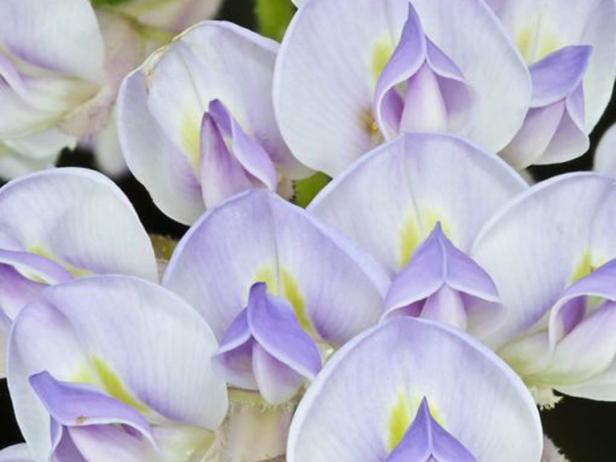50 fabulous flowers 50 photos - Flowers