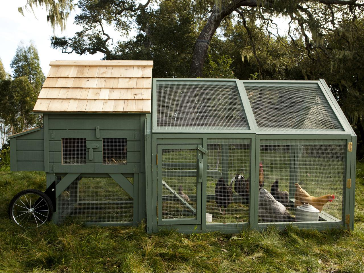 Williams-Sonoma Chicken Coops in Dig It! Design | HGTV
