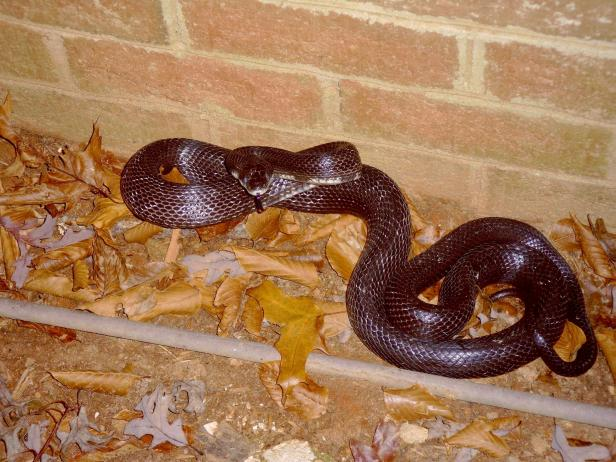 How To Keep Snakes Out Of Your Yard Hgtv