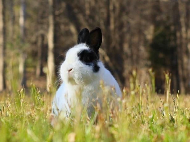How to Keep Rabbits Out of Your Garden HGTV