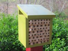 A Finished Pollinator Habitat