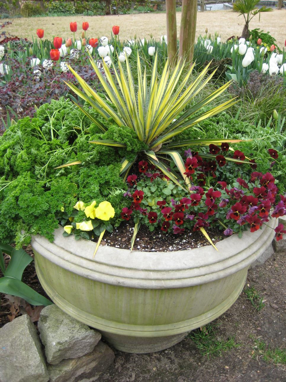 foolproof winter hardy tropical and temperate plants hgtv