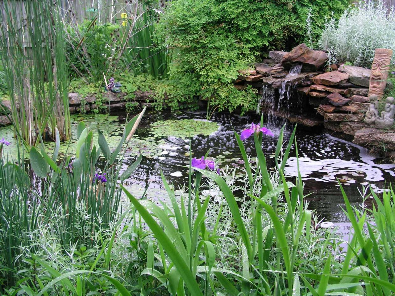 8 things to consider before you install a pond water for Plants for around garden ponds