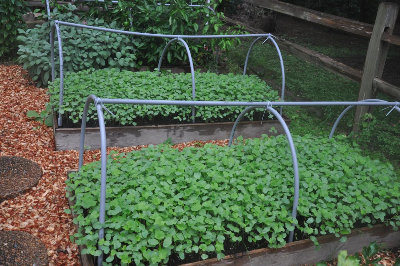 Cover Crops for Your Garden HGTV
