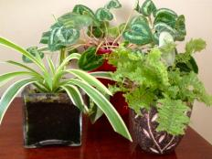 Overwintering Houseplants