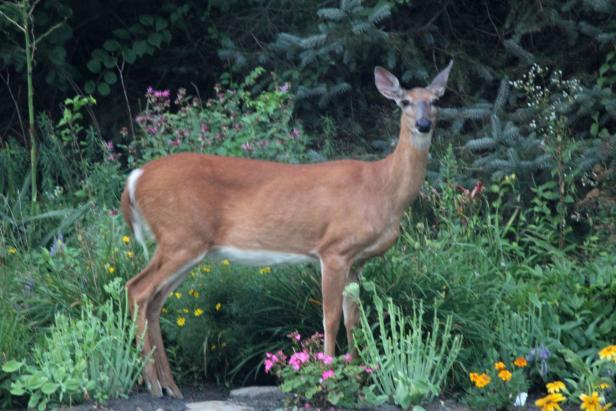 Fall  Garden Visitor