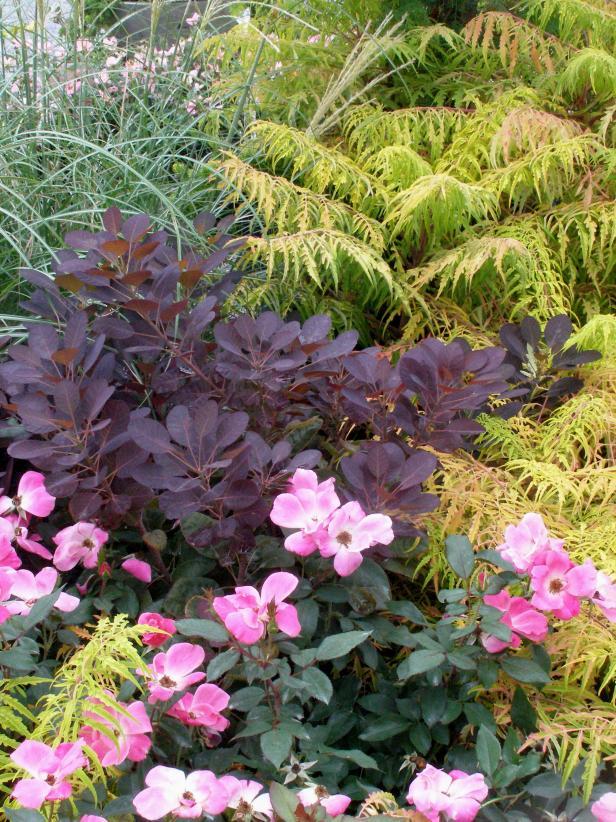Burgundy Plants And Flowers Hgtv