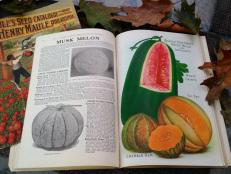 Antique seed catalog
