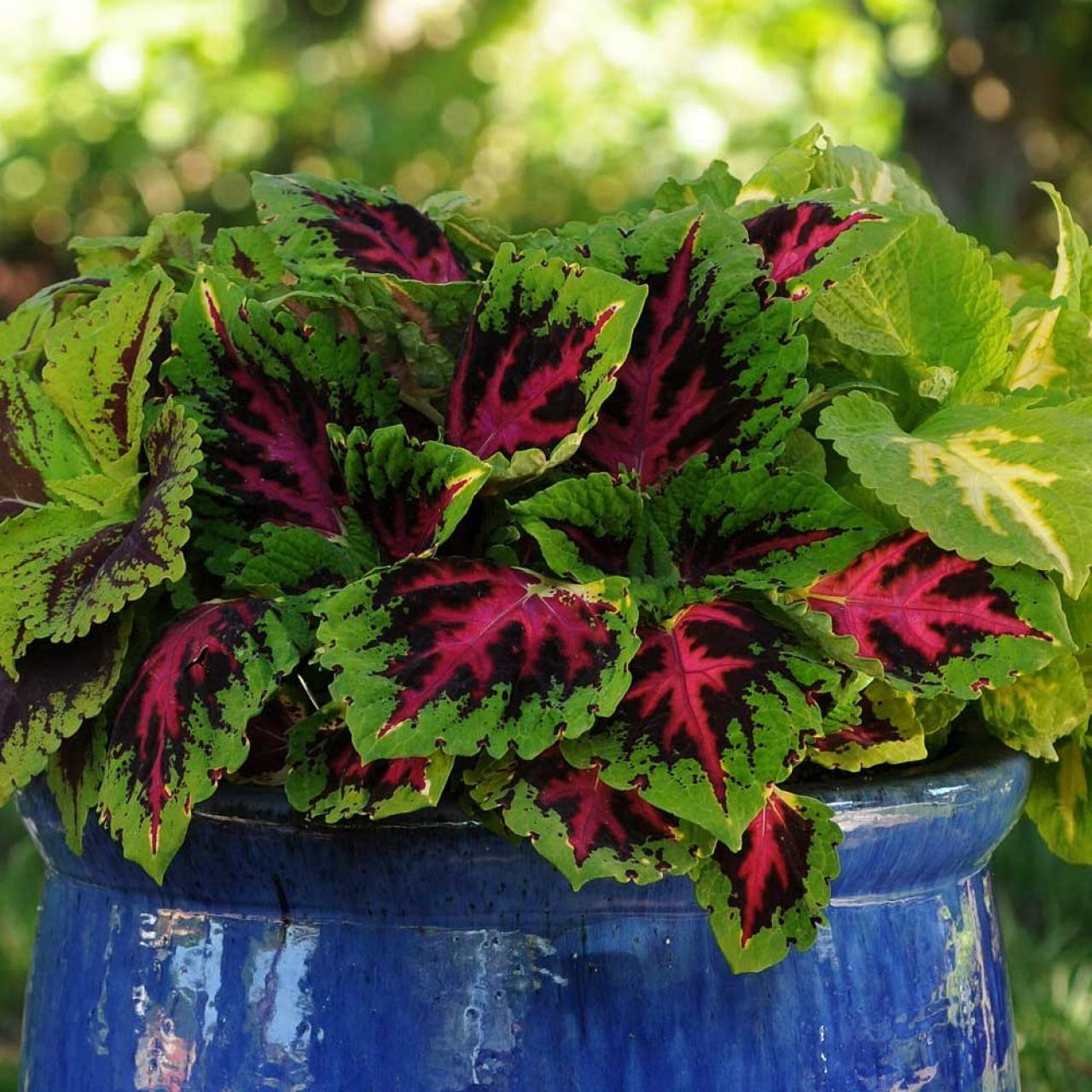 Garden Bed Filler Plants