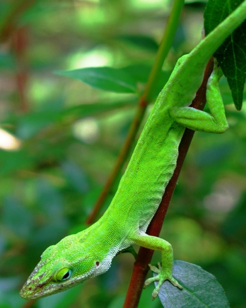 good reptiles and amphibians for the garden hgtv