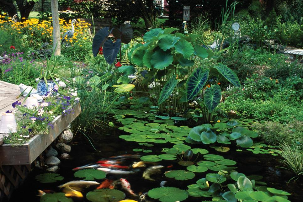 Plants for ponds and water gardens hgtv for Plants for around garden ponds