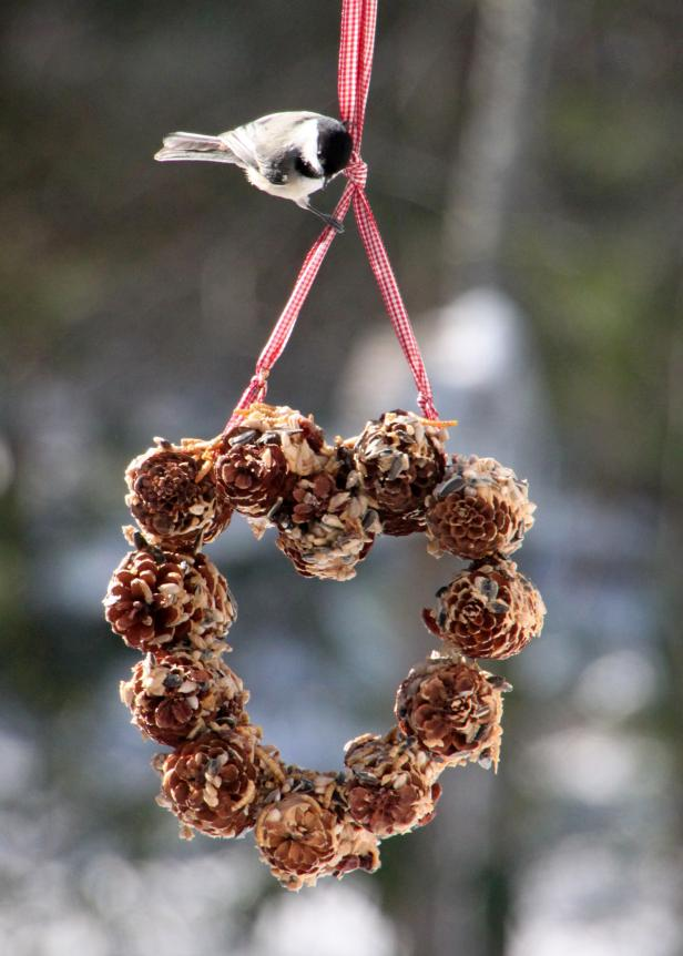 Valentines for the Birds