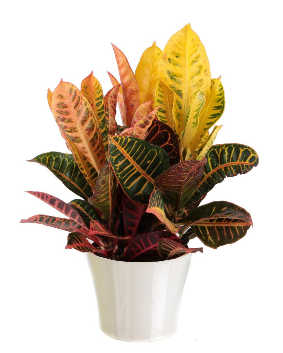Common house plants hgtv Images of indoor plants