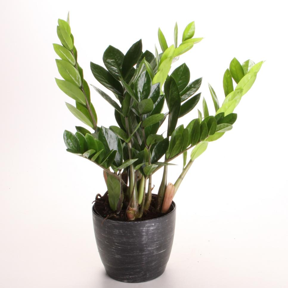 Indoor plants low light hgtv for Indoor plants easy maintenance