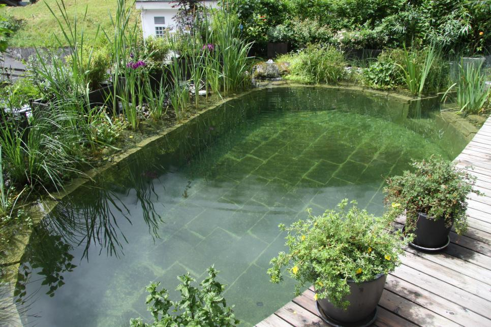 Amazing Natural Swimming Pools Hgtv