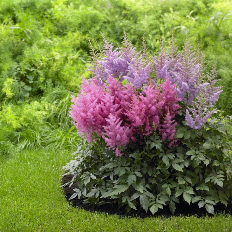 Perennial flowers for shade gardens hgtv for Low maintenance bushes for shade