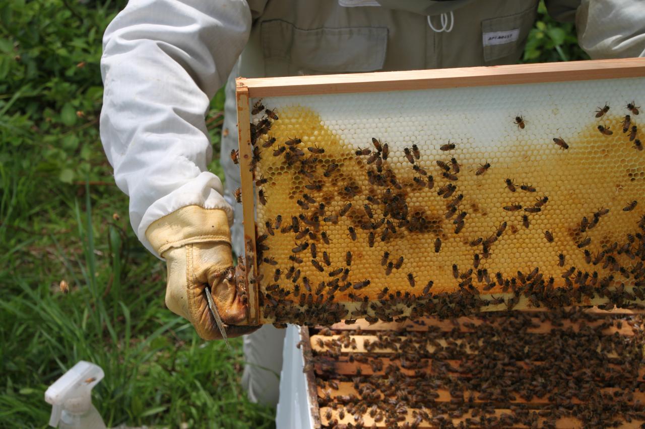 Become a Beekeeper | Backyard Beekeeping for Beginners | HGTV