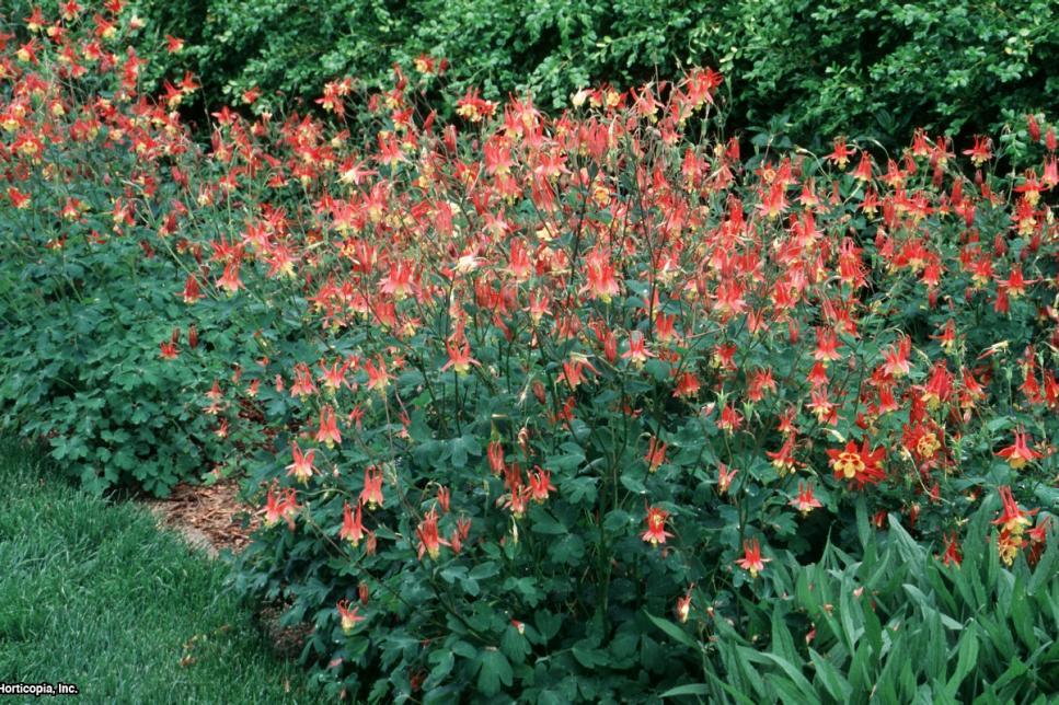 Hummingbird Plants Hgtv