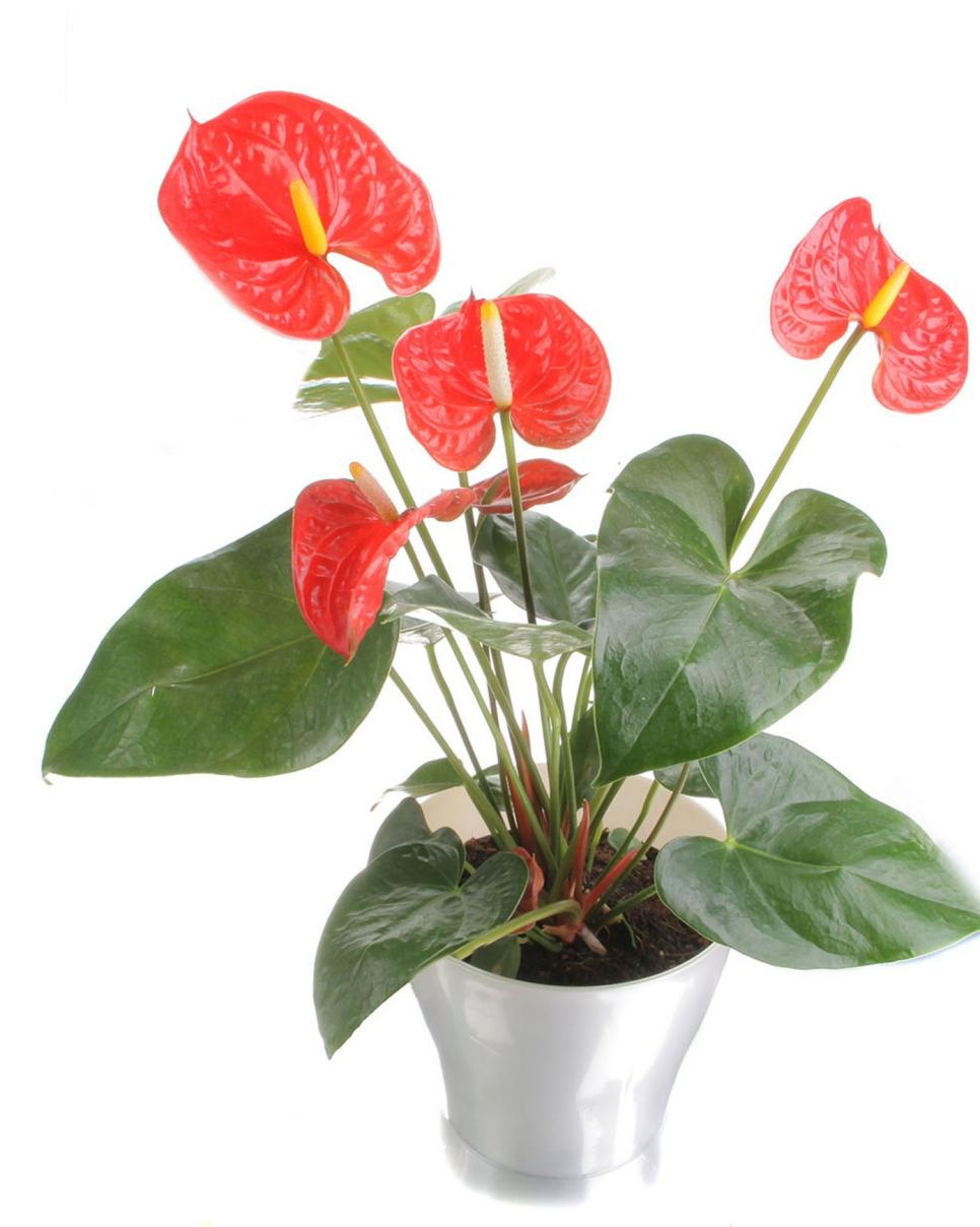 Health benefits of houseplants hgtv Images of indoor plants