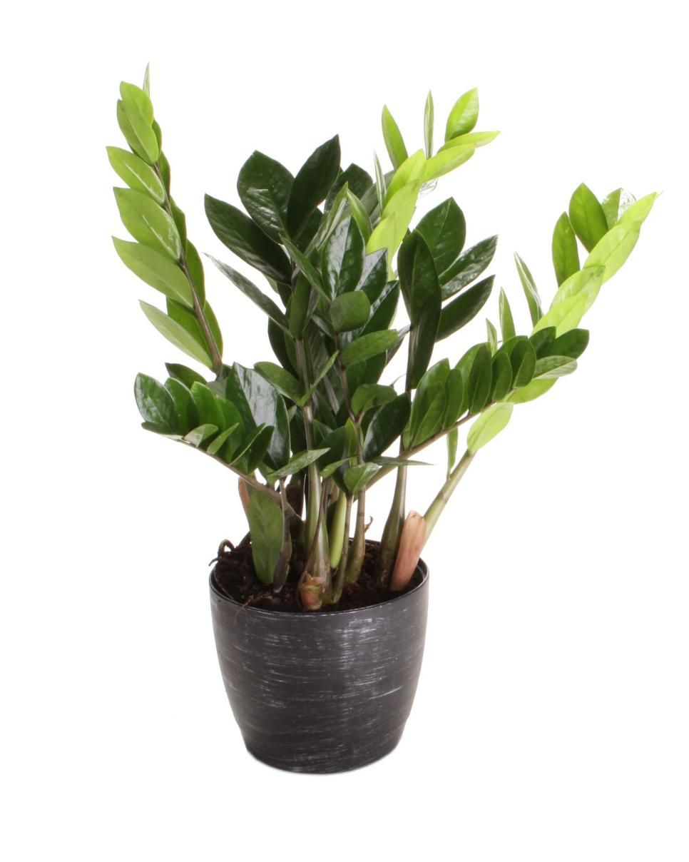 Health benefits of houseplants hgtv Best small office plants