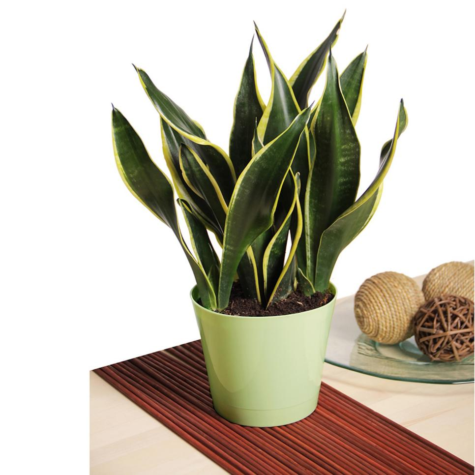 Low maintenance houseplants hgtv for Maintenance of indoor plants