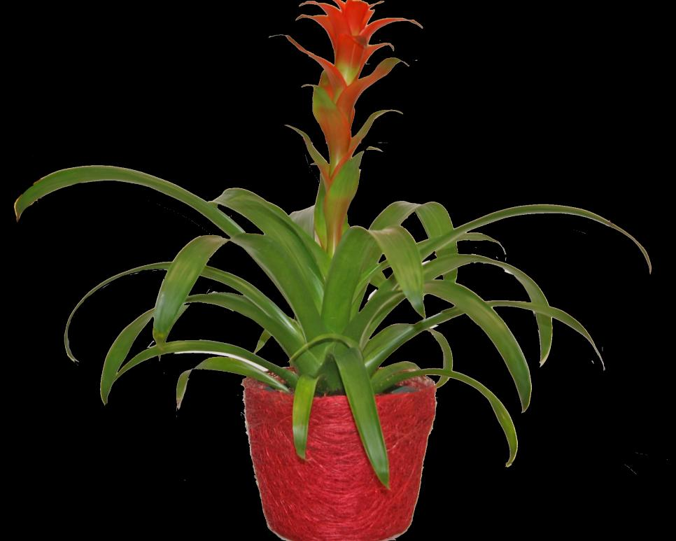 Low maintenance houseplants hgtv for Low maintenance indoor flowering plants