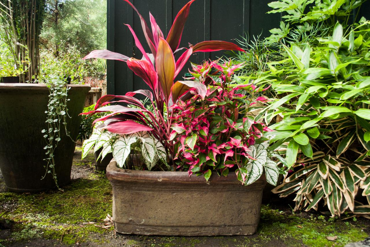 Maintaining Container Gardens HGTV