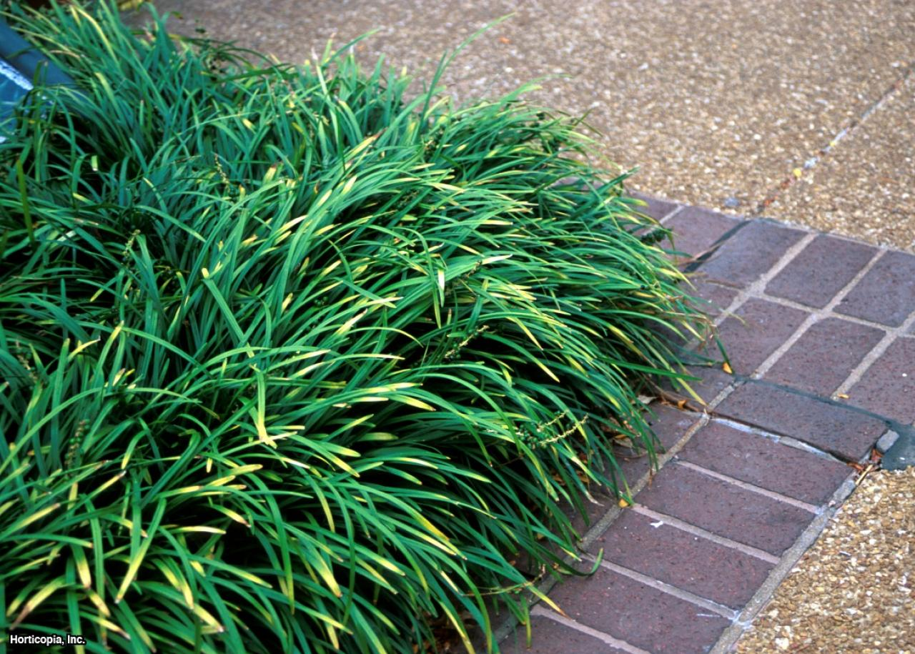 Invasive ornamental grasses hgtv for Small landscape grasses