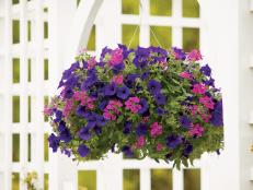 Hanging Basket with Petunia and Verbena