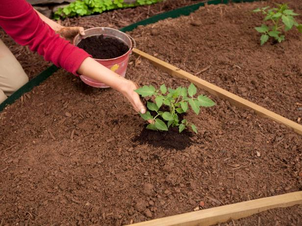 Plant the transplants at the same depth as they were in their containers, and firm the soil around the roots. Top-dress each plant with a handful or two of compost.