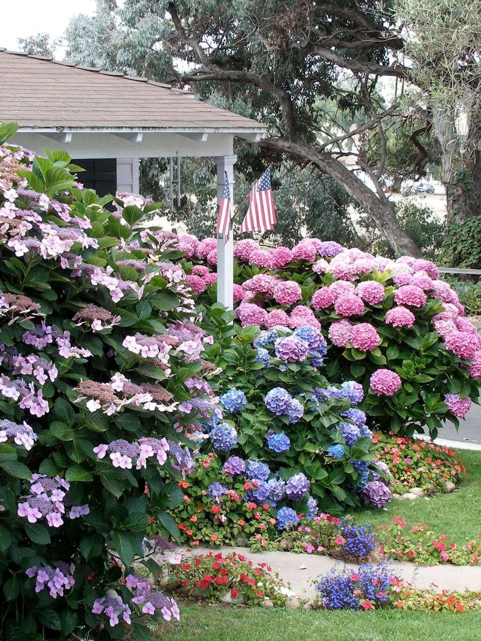 Types Of Bushes Flowering Hgtv