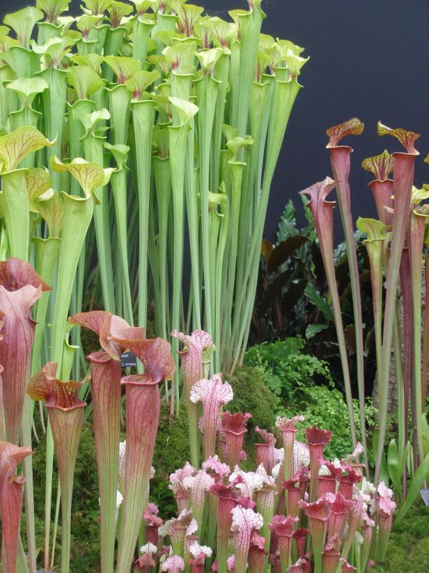 Flesh Eating Plants Hgtv