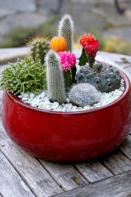 DIY Cactus Dish Garden HGTV