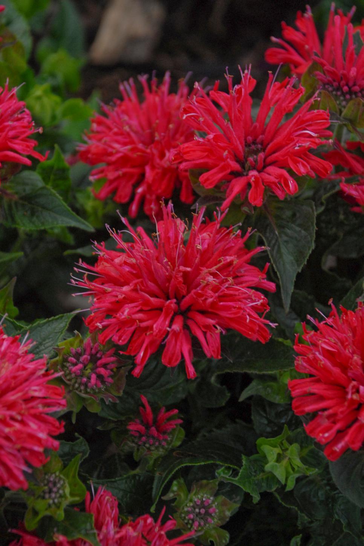 14 Perennials for Full Sun | HGTV