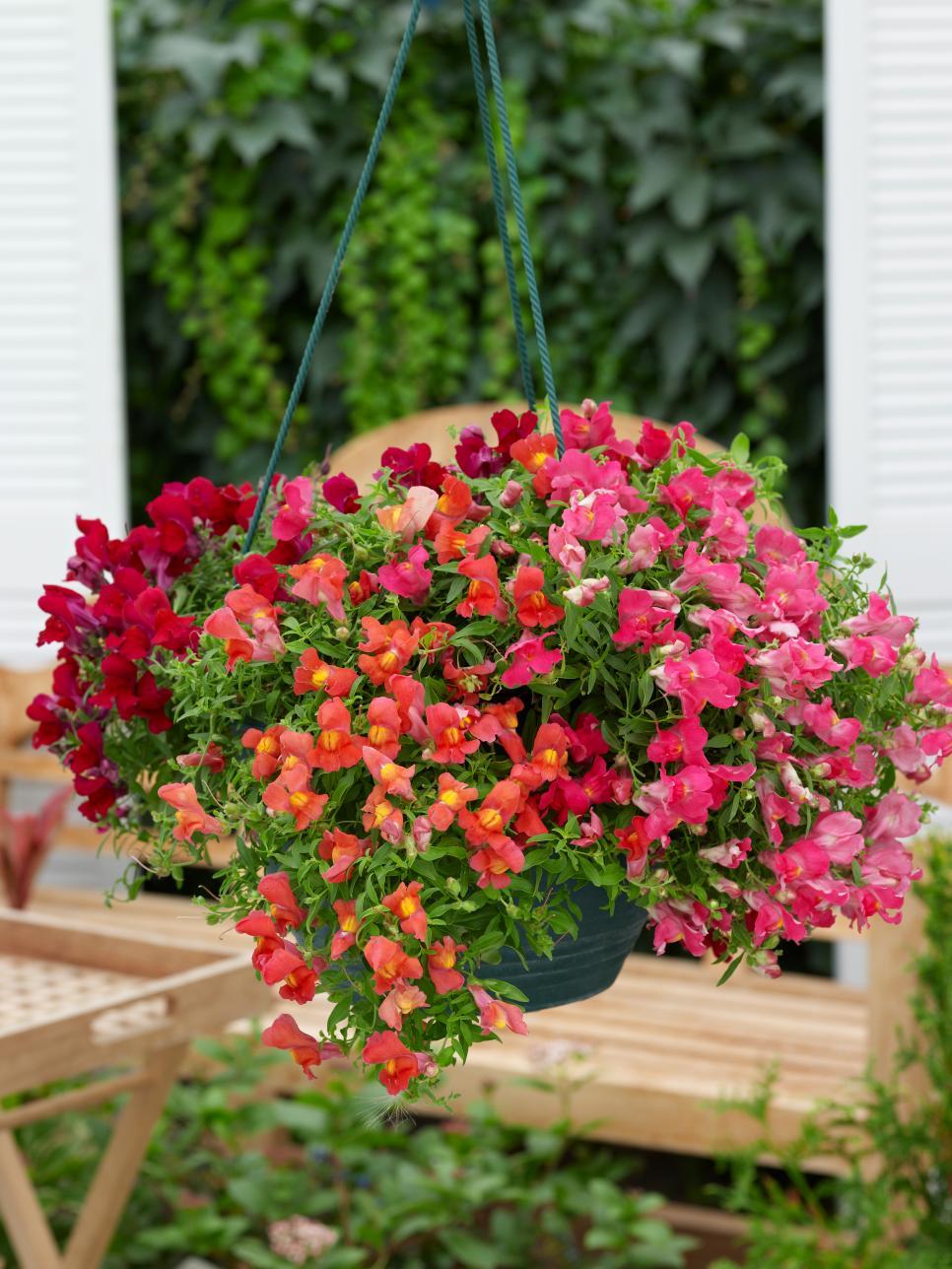 13 Fall Container Garden Recipes