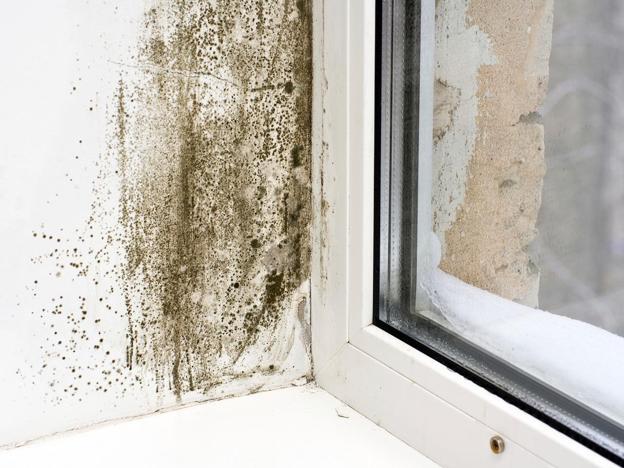 mon Areas for Mold Growth