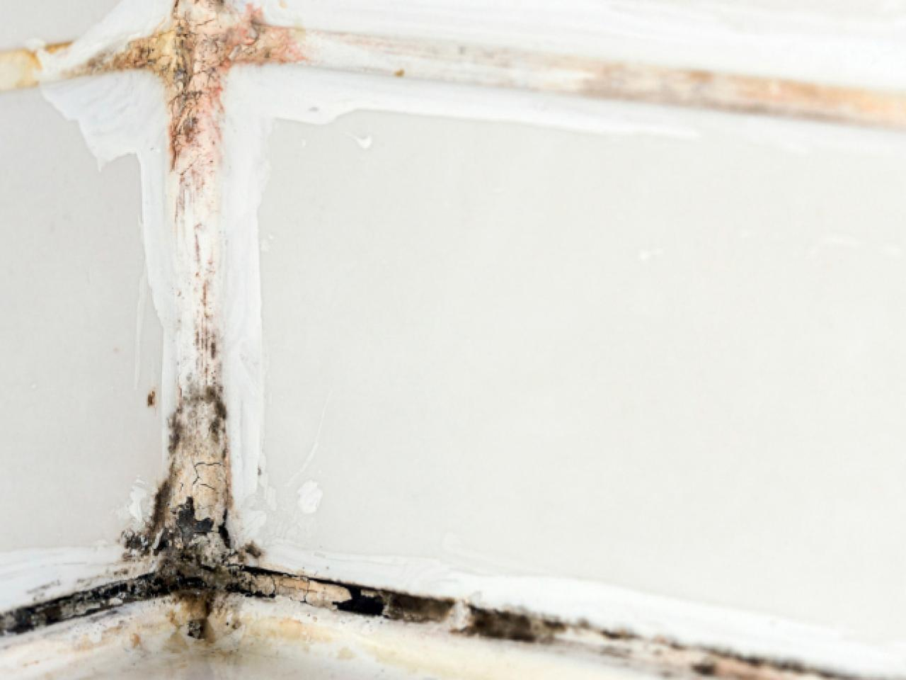 Mold In Bathroom Causes how to remove black mold | hgtv