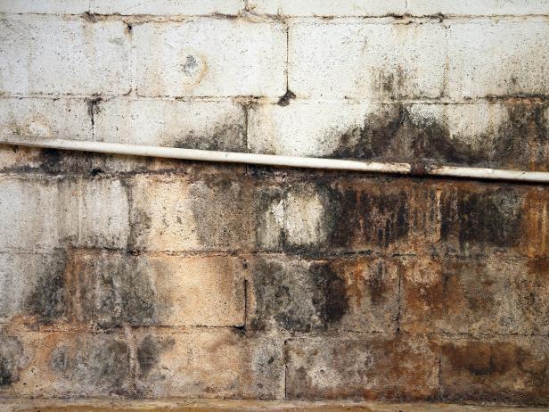 HGRM_moldy-basement-wall_s4x3