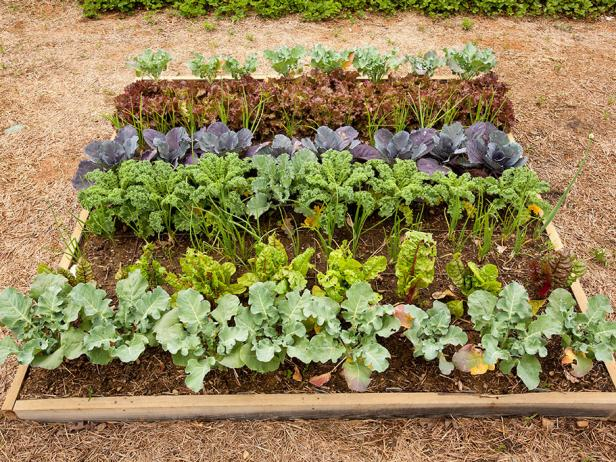 Small Raised Garden Bed With Cool-Season Vegetable