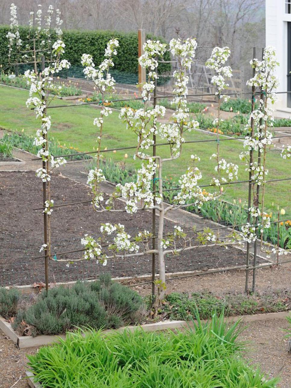 Edible landscape design hgtv for Peach tree designs