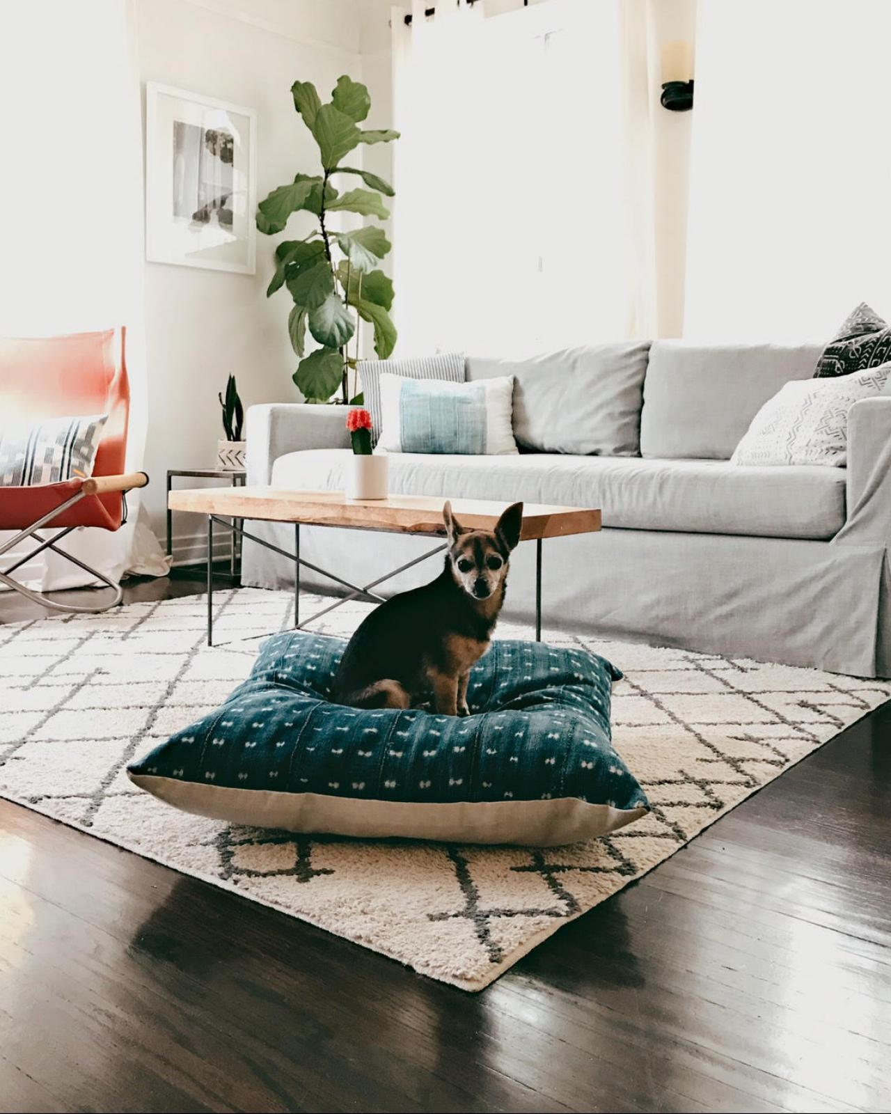 12 Stylish Dog Beds for National Puppy Day